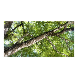BLack Olive Tree Canopy Picture Card