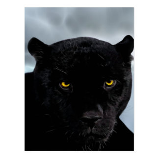 Black Panther Panthera Postcard