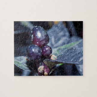 Black Pearl Pepper fruit and leaves Jigsaw Puzzle