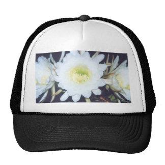 Black Phoebe cap Trucker Hat