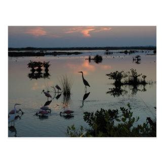 Black Point Egret Postcard