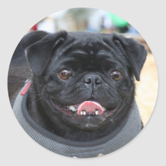 Black Pug Dog stickers