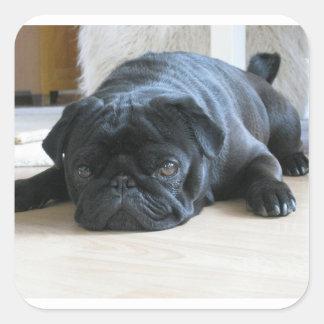 black pug flat square sticker
