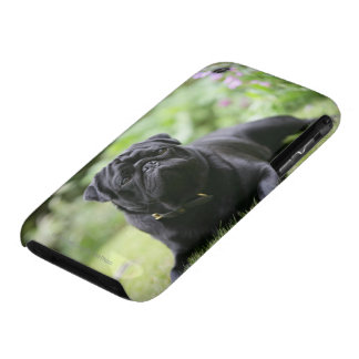 Black Pug Laying Down iPhone 3 Case