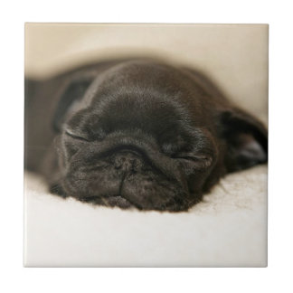 Black Pug Puppy Sleeping Small Square Tile