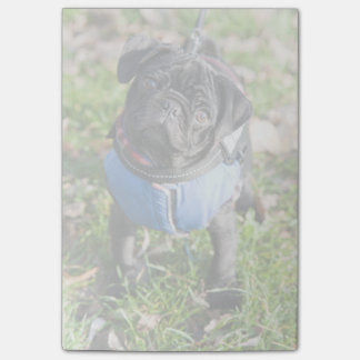 Black Pug Puppy Wearing A Jacket Post-it® Notes