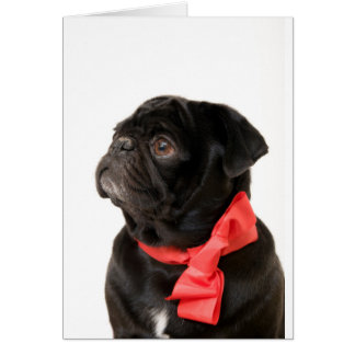 Black pug  with red bow card