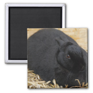Black Rabbit Square Magnet