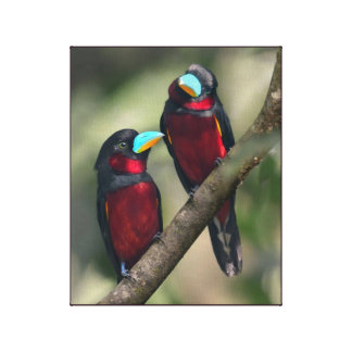 Black & Red Broadbills Canvas Print