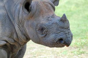 Rhino Lunch Boxes | Zazzle com au