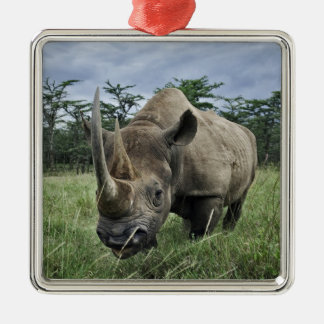 Black Rhinoceros, Diceros bicornis, Kenya Metal Ornament