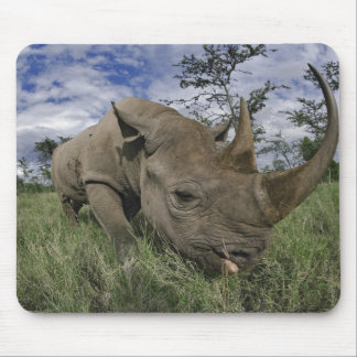 Black Rhinoceros, Diceros bicornis, Kenya Mouse Pad