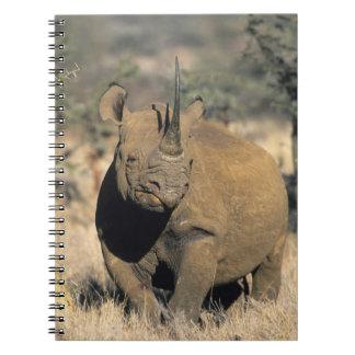 Black Rhinocerous, (Diceros bicornis), Northern Notebook