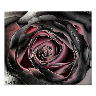 Black Rose Canvas Print Poster
