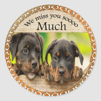 Black Rottweiler cute puppy dogs with sad faces Classic Round Sticker