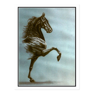 Black Saddlebred Horse Postcard