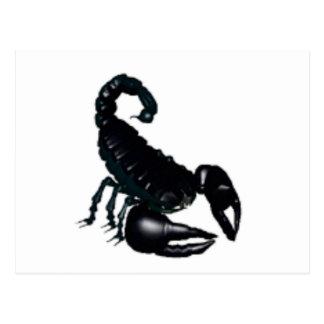 Black Scorpion Postcard