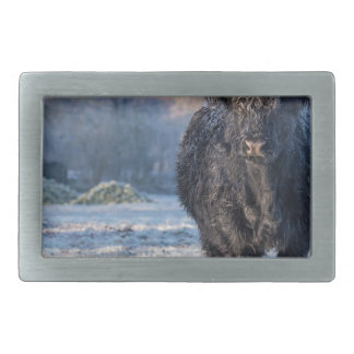 Black scottish highlander cow in winter landscape belt buckles