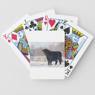 Black scottish highlander cow in winter snow bicycle playing cards