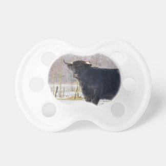 Black scottish highlander cow in winter snow dummy