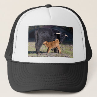 Black Scottish highlander mother cow and young Trucker Hat