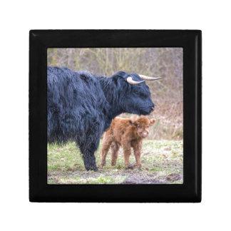 Black Scottish highlander mother cow with newborn Gift Box