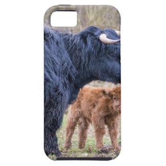 Black Scottish highlander mother cow with newborn iPhone 5 Case
