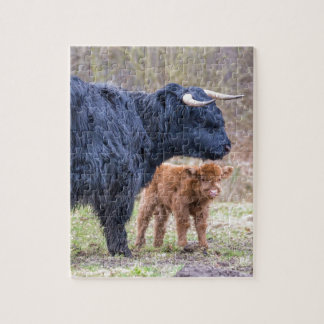 Black Scottish highlander mother cow with newborn Jigsaw Puzzle