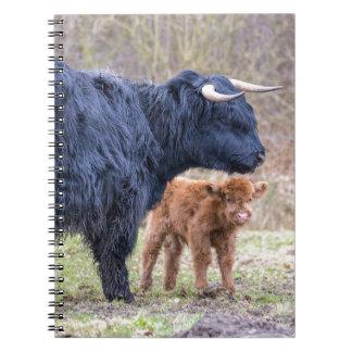 Black Scottish highlander mother cow with newborn Notebook