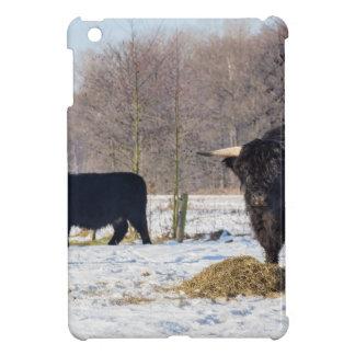 Black scottish highlanders in winter snow iPad mini case