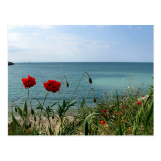 Black Sea and Red Poppies Postcard