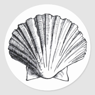 Black Sea Shell Sticker