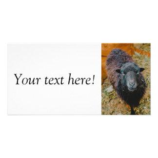 Black sheep photo cards