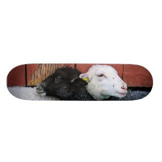 Black Sheep White Sheep Skateboard