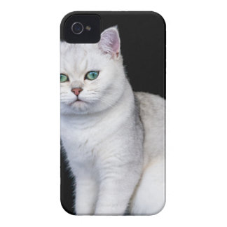 Black silver shaded British short hair cat iPhone 4 Case-Mate Case
