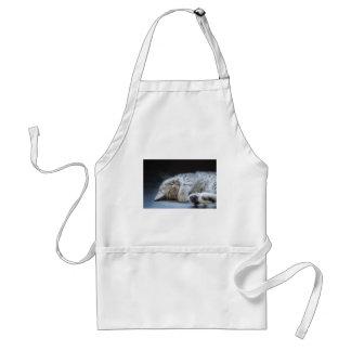 Black silver tabby kitten lying lazy standard apron