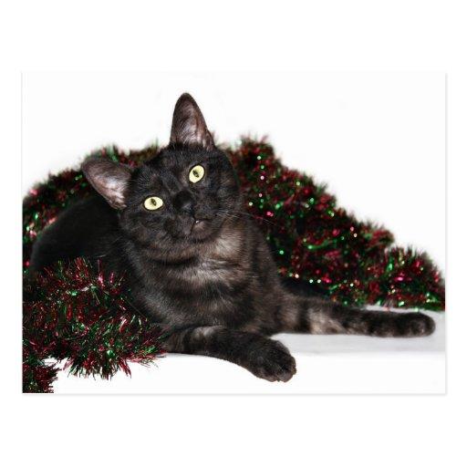 Black smoke cat Christmas Post Card