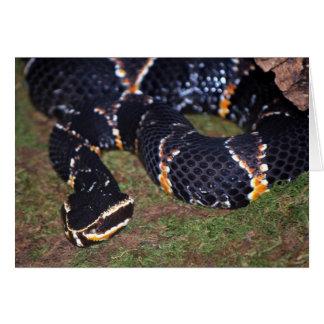 black snake greeting card