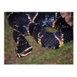 black snake postcards