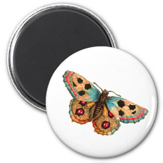 Black Spotted Butterfly Magnet