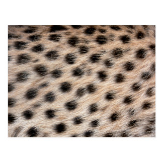 black spotted Cheetah fur or Skin Texture Template Postcard