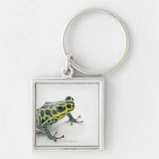 Black Spotted Green Poison Dart Frog (Ranitomeya Key Ring