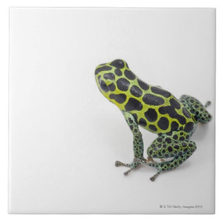 Black Spotted Green Poison Dart Frog Tile