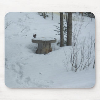 Black Squirrel eating Mouse Pad