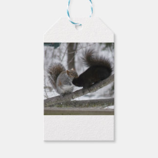 Black Squirrel Gift Tags