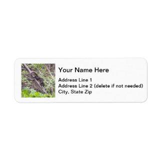 Black Squirrel Return Address Label