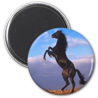 Black Stallion 6 Cm Round Magnet