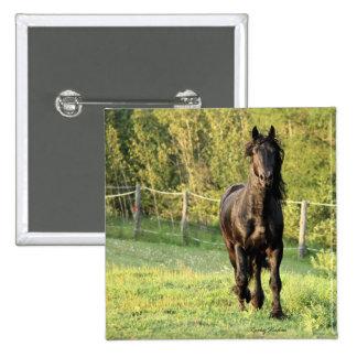 Black Stallion Pin