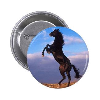 Black Stallion Pinback Button