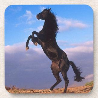 Black Stallion Coasters